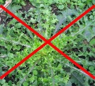Make Your Own Weed Killer
