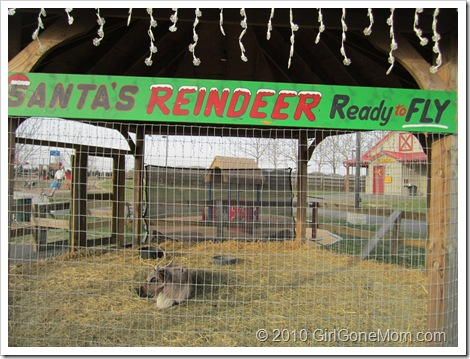 Wordless Wednesday–Santa's Reindeer Spotted