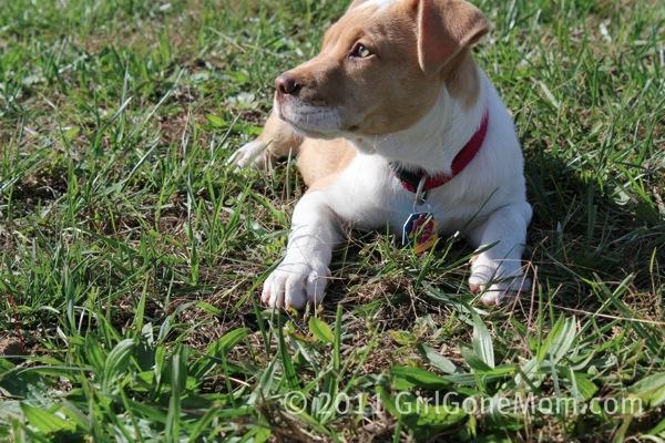 Winnie puppy