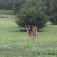 Wordless Wednesday – Bucks in the back yard