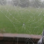 WW – Spiderless Web