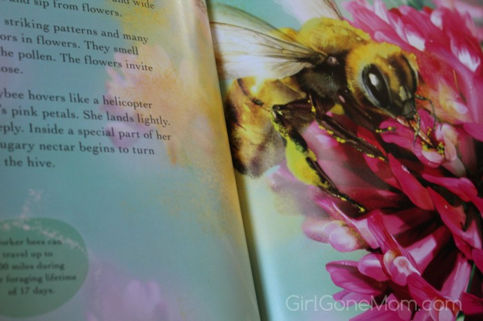 Bee Life (Books to Fill Preschoolers' Easter Baskets)