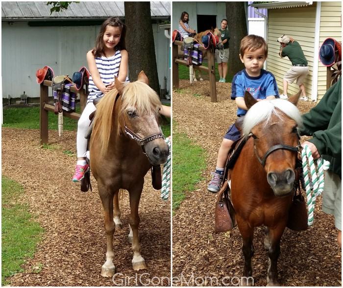 dw-pony