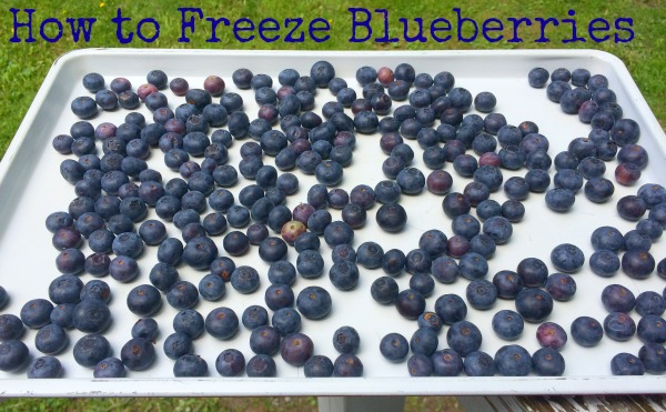 50+ Blueberry Recipes | GirlGoneMom.com