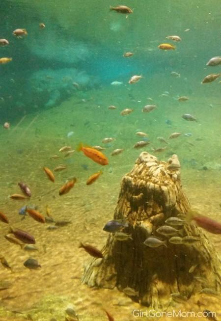Adventure Aquarium Family 4-Pack Giveaway!