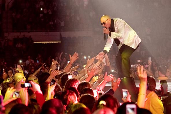 Pitbull Image One