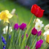 Friday Finds for Spring