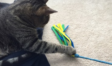 DIY felt cat wand