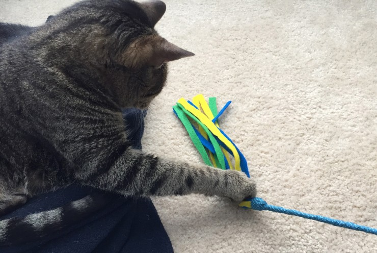 DIY Cat Toy