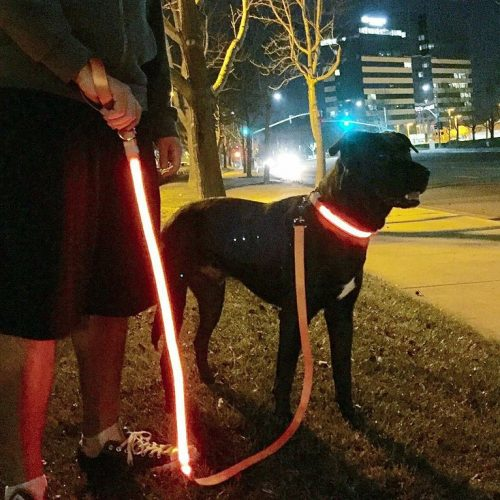 Light-up Leash Giveaway